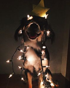 Marry Christmas, Dog, Picture, Creative, Inspiration