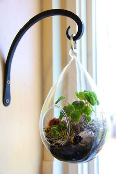 Get 21 hanging glass terrarium ideas to decorate your home and pursue your small gardening. Learn how to setup a hanging glass terrarium to decorate your room. Terrariums Diy, How To Make Terrariums, Air Plant Terrarium, Garden Terrarium, Diy Planters, Planter Ideas, Wall Terrarium, Hanging Glass Terrarium, Terrarium Wedding
