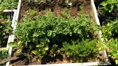 Kale and other stuff