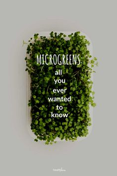 Microgreens: Health Benefits Nutrition and How to Grow Them Calendula Benefits, Lemon Benefits, Matcha Benefits, Coconut Health Benefits, Health Blog, Health Articles, Health Diet, Health Fitness, Culture Indoor