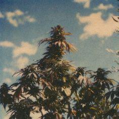Ah Smoke weed :$
