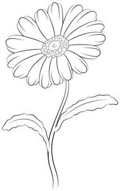 daisy leaf outline - - Yahoo Image Search Results