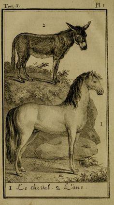 Donkey & Horse from Monsieur Comte de Buffon's Histoire Naturelle, Generale et Particuliere, 1750-1804.