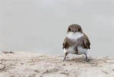 altacal birds - Bing images