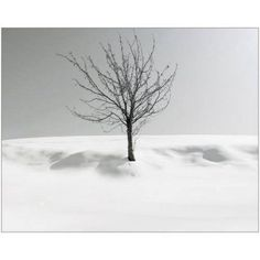Melancholy Tree Black and White Photograph Photography by Eazl, Size: 10 x 8