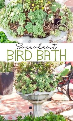 Succulent Bird Bath made with an old birdbath. Learn all the tips and tricks to keep your succulents happy. Succulent Bird Bath made with an old birdbath. Learn all the tips and tricks to keep your succulents happy. Lawn And Garden, Garden Art, Garden Design, Tips And Tricks, Container Gardening, Gardening Tips, Bird Bath Planter, Basket Planters, Succulent Planters
