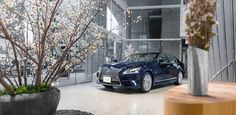 The Lexus LS600h, in harmony with the 'Sakura' – March cherry blossoms in season – in Tokyo and throughout Japan.