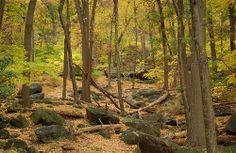 Bear Mountain State Park, New York RP for you by http://lisa-dizenzo-dchhondaofnanuet.socdlr2.us/