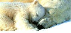 Time to sleep,,,