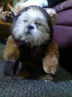 Wookie dog!!! :)))