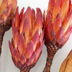Natural Protea Repens Flower Pods in Red Orange6 Pieces Per Bunch