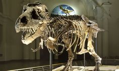 Exhibitions & Events | The Field Museum