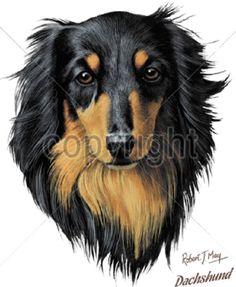 Dachshund Long Hair Dog HEAT PRESS TRANSFER for T Shirt Sweatshirt Tote Bag 835