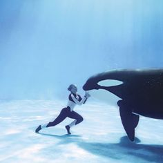 Orca & Sea World Trainer Beautiful Creatures, Animals Beautiful, Cute Animals, Orcas, Whale Pictures, Funny Pictures, Random Pictures, Funny Pics, Wale