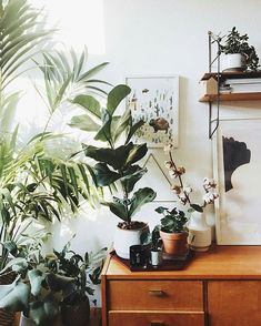 Retro home decor Ideas From small to cozy retro tips for that fantastically hip retro home decor ideas plants Tip number posted on 20181123 Home Interior, Interior And Exterior, Interior Design, Ficus Lyrata, Plantas Indoor, Decoration Plante, Deco Originale, Retro Home Decor, Plant Decor