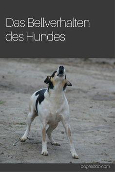 Hunde bellen - doch sie tun es nicht einfach nur so, sondern sie wollen uns damit auch etwas sagen