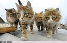 ganster cat strike back - 1CUK - For Fun Only !