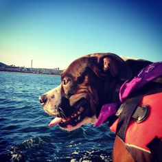 """Yet another great day out on the lake. #dogdaysofsummer #westmarine #sailin"""