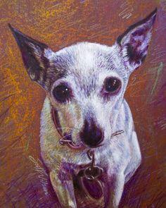 Dog portrait toy fox terrier