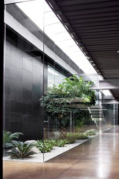 View the full picture gallery of Bonaldo Showroom Atrium Garden, Indoor Courtyard, Tropical Garden Design, Backyard Garden Design, Minimalist Architecture, Sustainable Architecture, Interior Garden, Home Interior Design, Dream Home Design