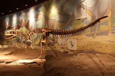 Allosaurus at the Utah Field House of Natural History State Park Museum | Flickr - Photo Sharing!