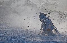 mud creature Flickr fantommst