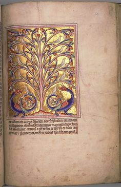 The Perindens Tree in the Aberdeen Bestiary.  A symmetrical arrangement of doves in the branches of the tree and two dragons at its base. Wood pigeons, not rock doves, will feed on fruit. This is a Physiologus subject. Quire mark 'K' at bottom centre. The Aberdeen Bestiary, written and illuminated in England around 1200, is of added interest since it contains notes, sketches and other evidence of the way it was designed and executed. Website has images of the whole bestiary.