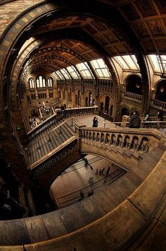 Wow, I've been here (Natural History Museum - London) and would never have seen that shot . Inspirational