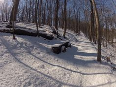 The trail leading to #7, along with a wintery looking log bench.