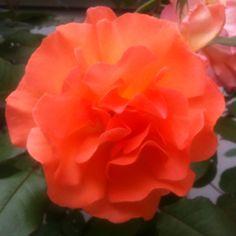 #fleurs #monaco