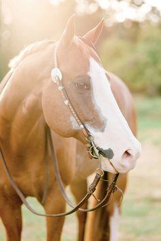 Charleen Gust | Salem Oregon | Kirstie Marie Photography | APHA PtHa Pinto Horse | www.kirstiemarie.com