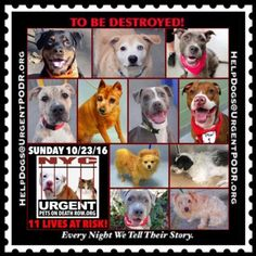 TO BE DESTROYED 10/23/16 - - Info  Please Share:  To rescue a Death Row Dog, Please read this:http://information.urgentpodr.org/adoption-info-and-list-of-rescues/  To view the full album, please click here:http://nycdogs.urgentpodr.org/tbd-dogs-page/ Please Share:-  Click for info & Current Status: http://nycdogs.urgentpodr.org/to-be-destroyed-4915/
