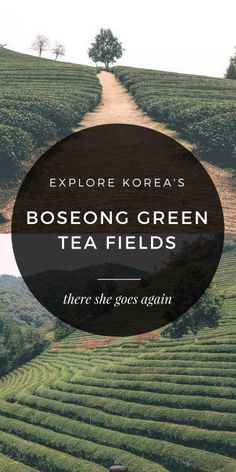 Escape the big cities, and head to the Boseong Green Tea Fields in Korea for some nature, some hiking, and green tea EVERYTHING.