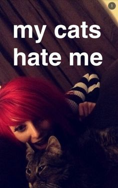 Alex) my cats hate me