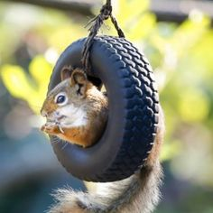 Just a squirrel and his goodyear
