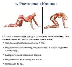 Yoga Fitness, Health Fitness, Anatomy Models, Pilates, Yoga Mom, Back Exercises, Back Pain Relief, Yoga For Men, How To Do Yoga