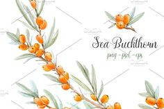 Watercolor set of Sea-buckthorn by Lembrik's Artworks on @creativemarket