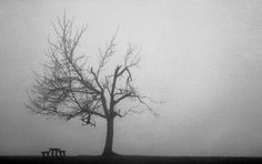 Tree in the fog - null Budapest, My Photos