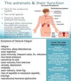 Adrenal support adrenal fatigue and lifestyle changes on pinterest