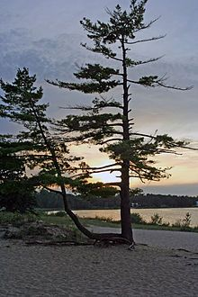 Wilderness State Park - Wikipedia, the free encyclopedia
