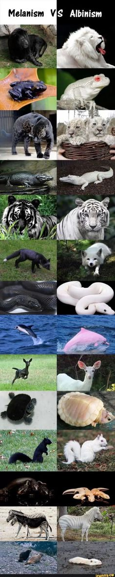 Oh my goodness.  What will it take for people to learn the difference between albinism and leucism?!  Only the frog and the alligator are albinos.  The other white animals are leucistic.  There's a difference.  Go read and learn something, folks.