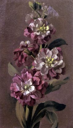 Anne Vallayer-Coster ( 1744 – I Study Of A Bouquet Of Gilly flowers Old Paintings, Beautiful Paintings, Flower Paintings, Flower Of Life, Flower Art, French Rococo, Wonderful Picture, Vintage Roses, Botanical Prints