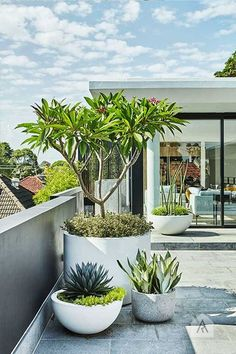 Garden Design Modern planting and sharp lines give this rooftop terrace and garden a contemporary appeal. - Modern planting and sharp lines give this rooftop terrace and garden a contemporary appeal. Outdoor Plants, Outdoor Gardens, Rooftop Gardens, Plants In Pots, Balcony Plants, Balcony Gardening, Potted Plants Patio, Garden Planters, Large Garden Pots