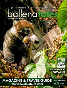 Ballena Tales South Pacific Costa Rica Magazine and Travel Guide  - made with simplebooklet.com Sibu, Monteverde, Costa Rica, Hotel Villas, South Pacific, Travel Guide, Cool Pictures, Digital Magazine, Big Spiders