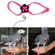 2015 Adjustable Nylon Animal Parrot Bird Harness Leash Rope(China (Mainland))