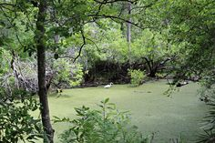 """Just fishing  in Brooker Creek Preserve in Tarpon Springs, Florida. Available in a 4x6"""" print."""