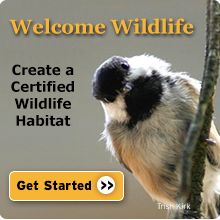 Whether you have an apartment balcony or a 20-acre farm, you can create a garden that attracts beautiful wildlife and helps restore habitat in commercial and residential areas. By providing food, water, cover and a place for wildlife to raise their young you not only help wildlife, but you also qualify to become an official Certified Wildlife Habitat®. From nwf.org