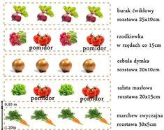 Ogródek warzywny dla początkujących