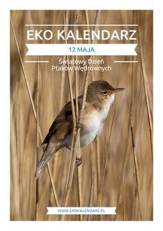 Dzień Ptaków Wędrownych – pakiet edukacyjny May 12, 12 Days, Birds, Content, Animals, Animales, Animaux, Bird, Animal