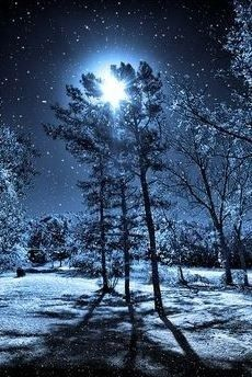 snowy trees in moonlight Forest Light, Sun And Stars, Fantasy Landscape, Landscape Photos, Trendy Tattoos, White Art, Blue Moon, Night Skies, Moonlight